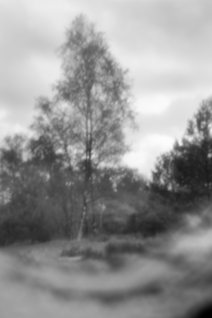 World Pinhole Day - tree of life, Rosmalen